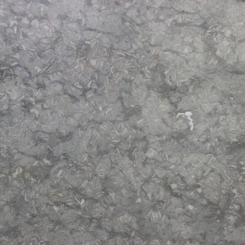 Grigio Fossil