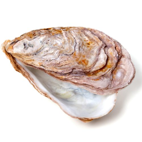 Ivory Shell