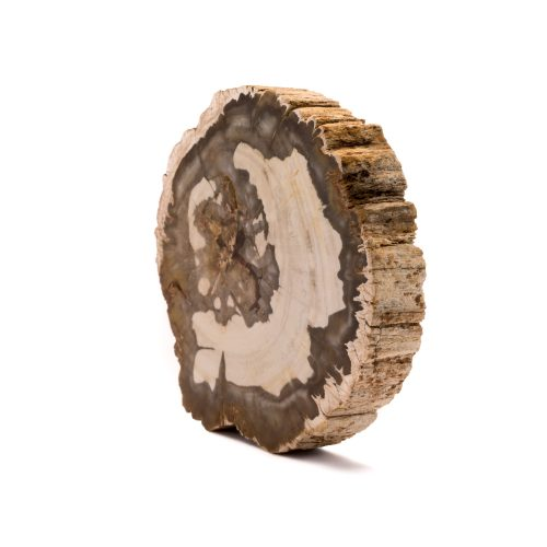 Brown Petrified Wood Retro